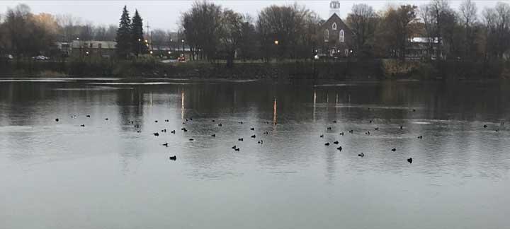 Parti courir: 300 canards et moi